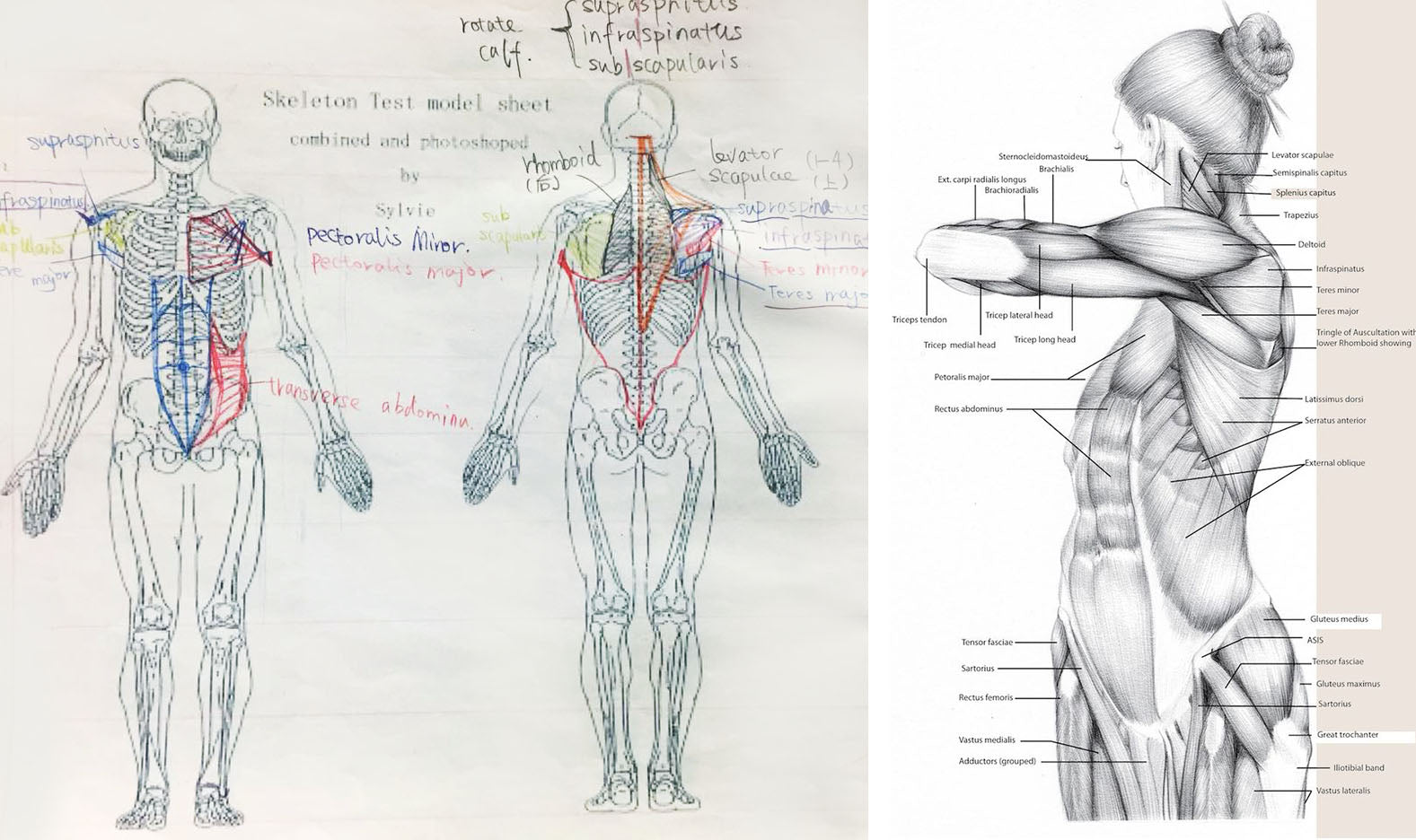 Anatomy Figure Drawing( From September 9 to Nov 11, 2018) – LoveFunArt