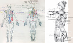 Anatomy Drawing (8/9-9/13 )