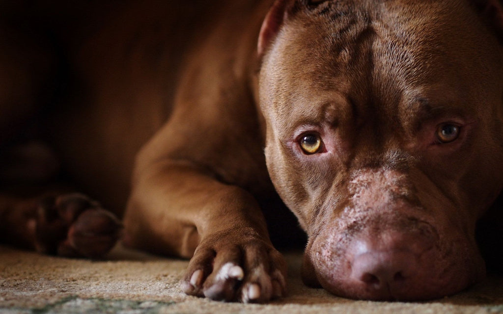 Is Breed Specific Legislation (BSL) Coming to Your Neighborhood?