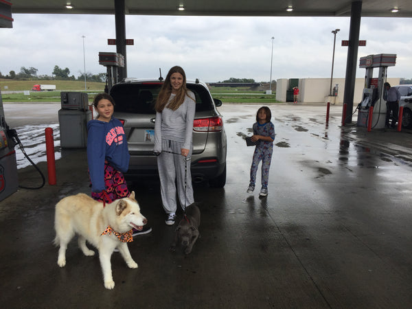 Diesel the Pit Bull Copper the Husky and Family