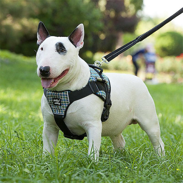 Dog Harness for medium and large dogs, Pit Bulls