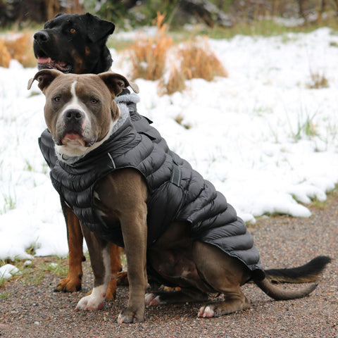 Alpine Extreme Weather Puffer Dog Coat by Doggie Design - Black   - Little Pit Shop