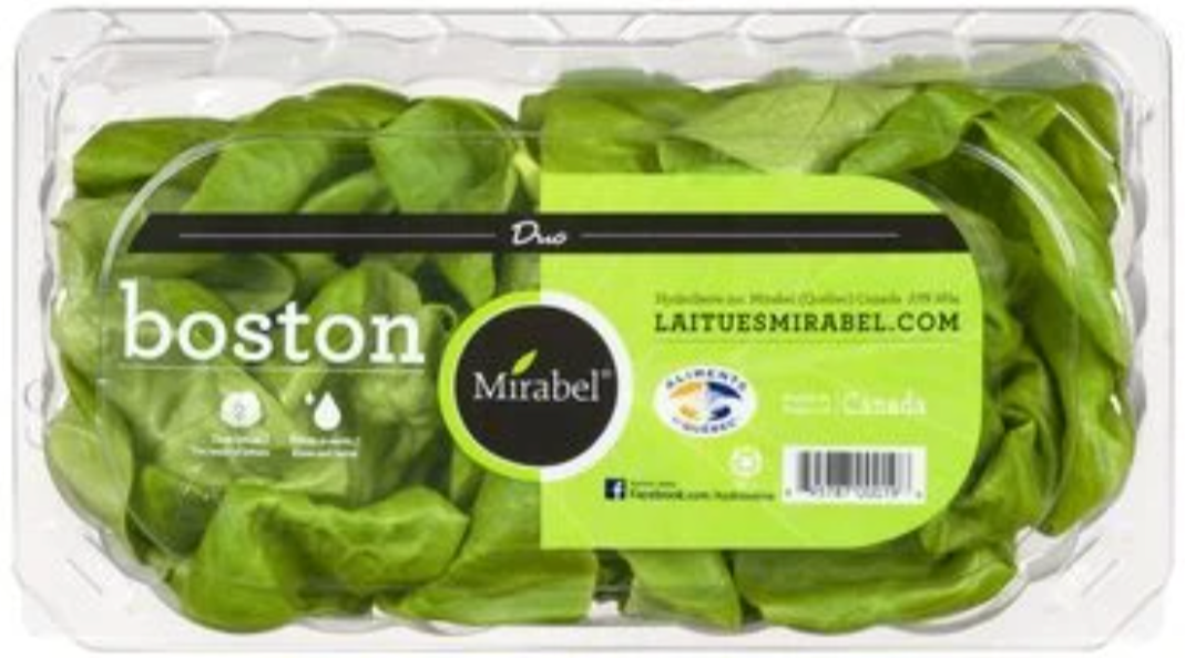 Hydroponic Boston lettuce, duo