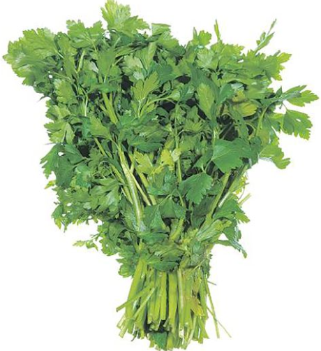 Parsley, Italian