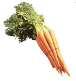 Carrots with Tops | Carottes avec feuilles