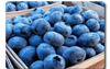 Blueberries 473g