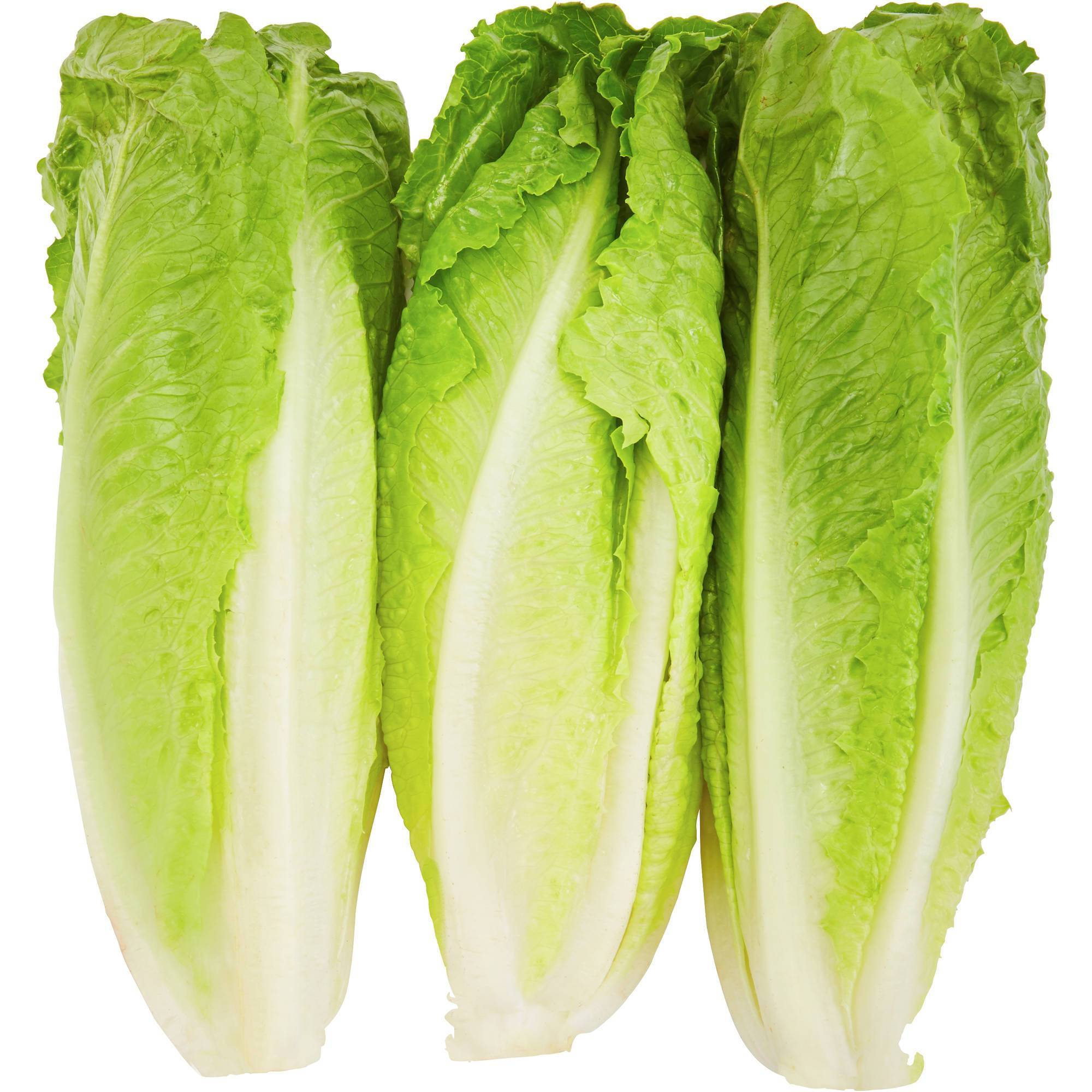 Organic Romaine Hearts 3 per pack