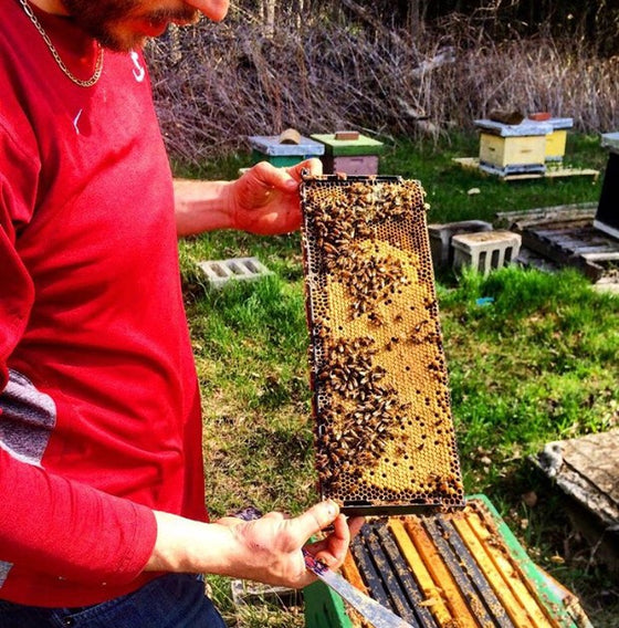 Hive Splitting & Nuc Making Workshop <br> Saturday June 8th 2019