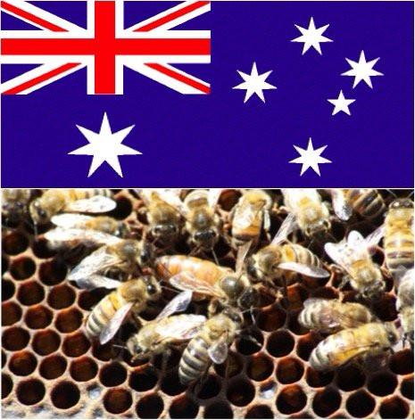 Australian Imported Queen <br> Taylor - May 2020