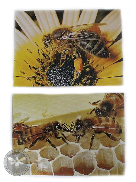 Honey Bee Picture Cards