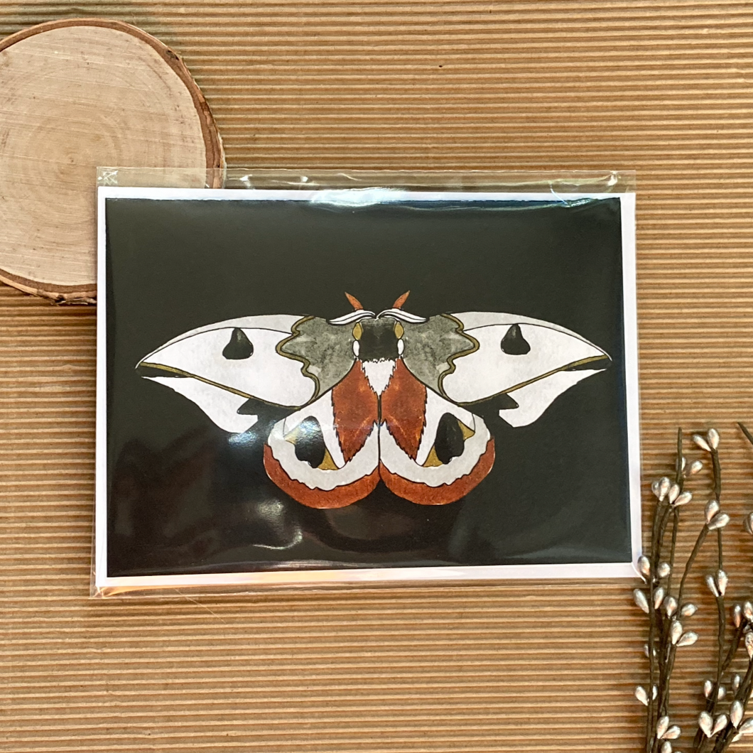 "Handle with Care ""Moth Greeting Card"""