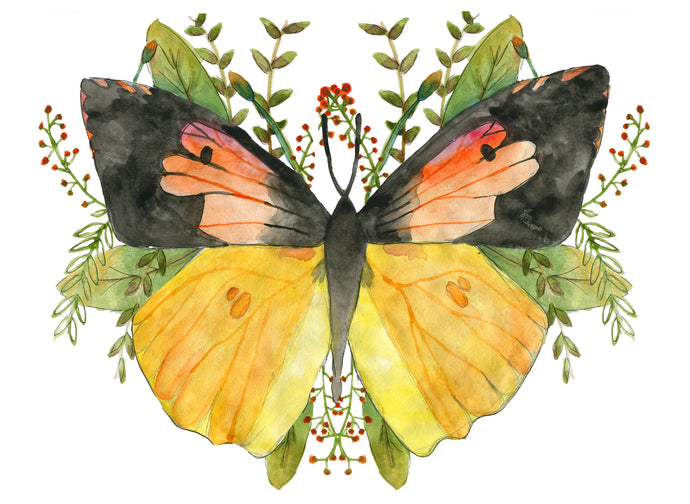 California Dogface Butterfly Print
