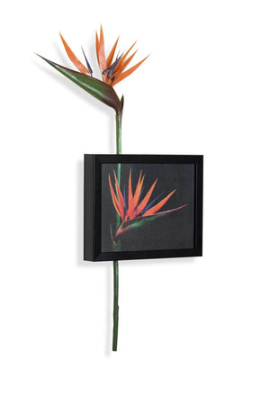 Bird Of Paradise Wall Art | Collection Roha