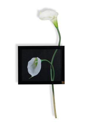 Cala Lilly Horizontal Wall Art | Collection Roha