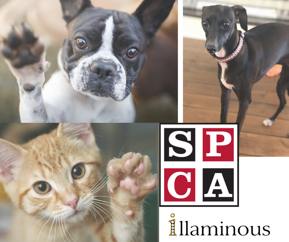 illaminous SPCA 5$ donation for each Personalized Dog Bone Christmas Stocking sale