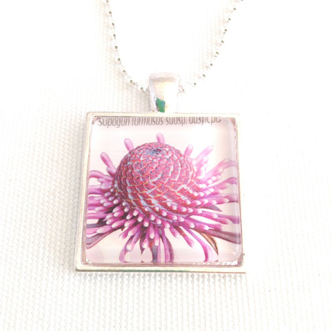 rose coneflower pendant, Australian native flower jewellery - StarzyiaPostage Stamp Jewellery