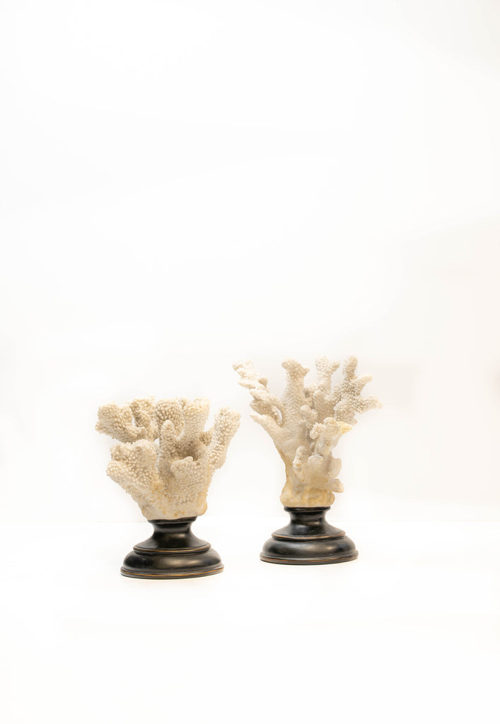 Set of Two White Coral Sculptures