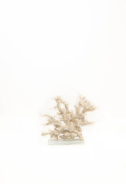 Coral Sculpture on Glass Base