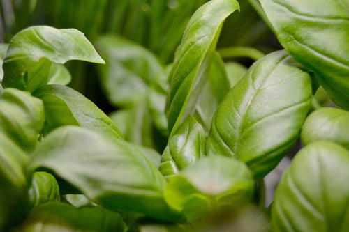 Herbs: did you know about their incredible virtues ?
