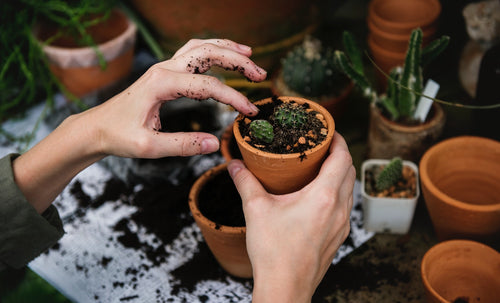 Our 5 tips to keep your plants healthy!