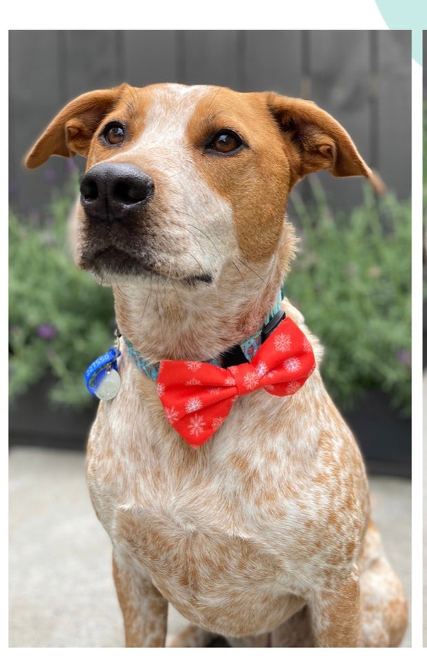 Healthy Dog & Co Xmas Bow Tie