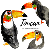 Toucan animal clipart