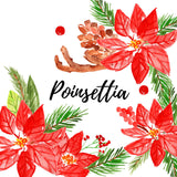 christmas poinsettia holiday floral clipart