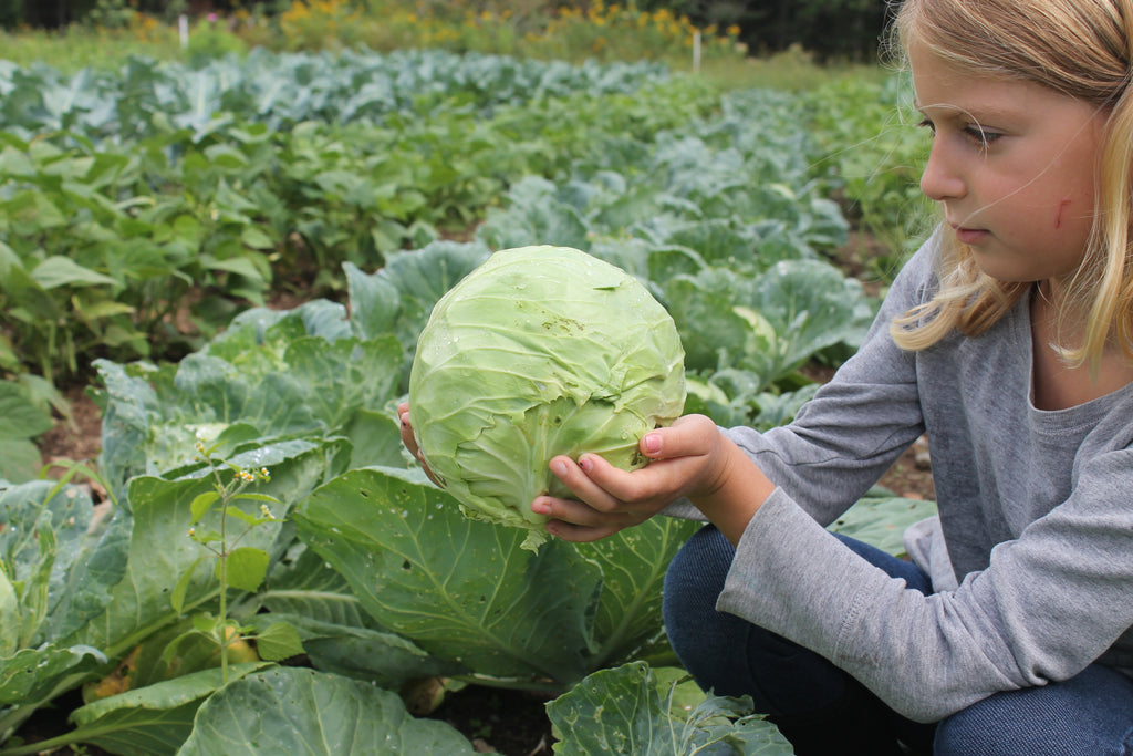 Cynthia's Kitchen - Cabbage