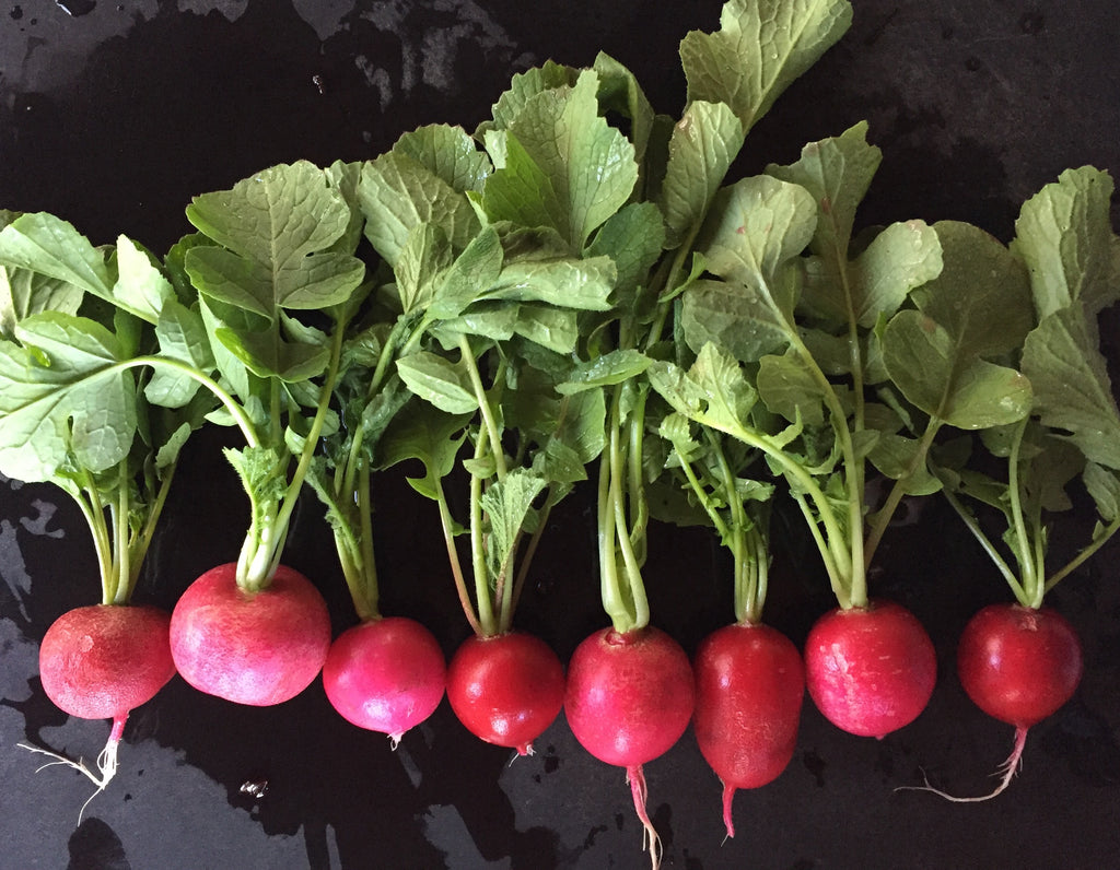 Cynthia's Kitchen - Sautéed Radishes with their Greens