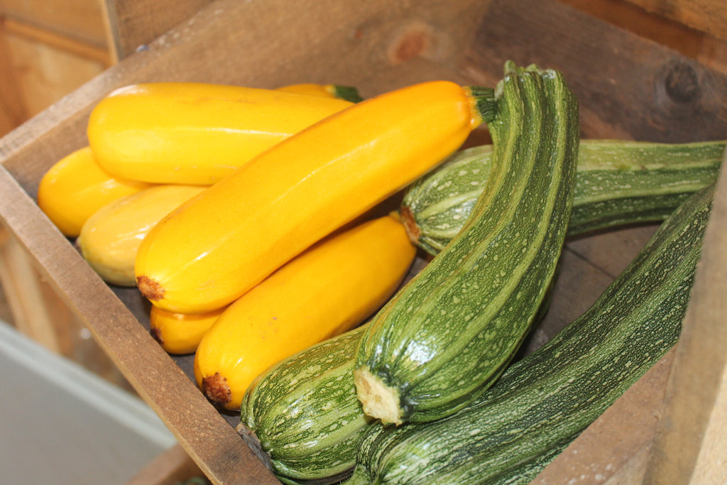 Cynthia's Recipes - Summer Squash