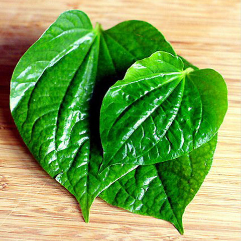 Maghai Paan /Betel Leaf  - Fruit Plants & Tree