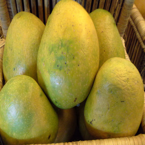 Mango Himayat (Grafted)- Big Size Plants