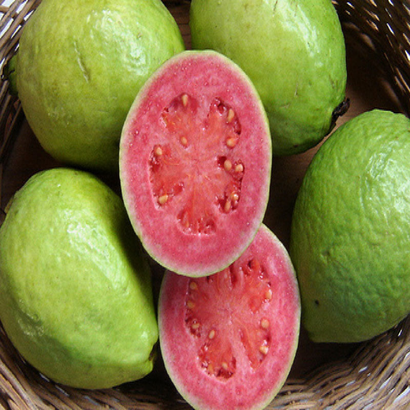 Guava Red Flesh  (Grafted)- Big Size Plants