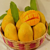 Mango Bahensha Or Bangenpalli  (Grafted)- Big Size Plants