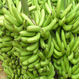 Banana-Tc Green - Fruit Plants & Tree - Exotic Flora