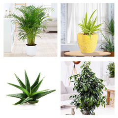 AIR PURIFYING PLANTS - Exotic Flora