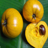 Eggfruit  - Fruit Plants & Tree - Exotic Flora