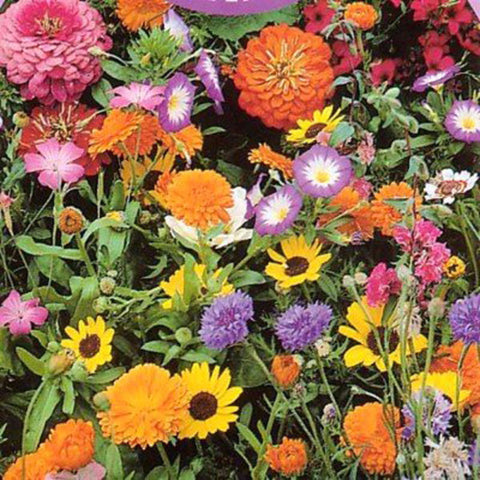 Annual Flowers-Flower Seeds