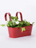 Oval Railing Planter Big Red