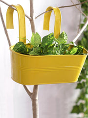 Oval Railing Planter Big Yellow