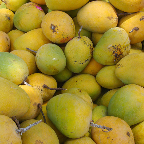 Mango Alphonso(Grafted) - Fruit Plants & Tree