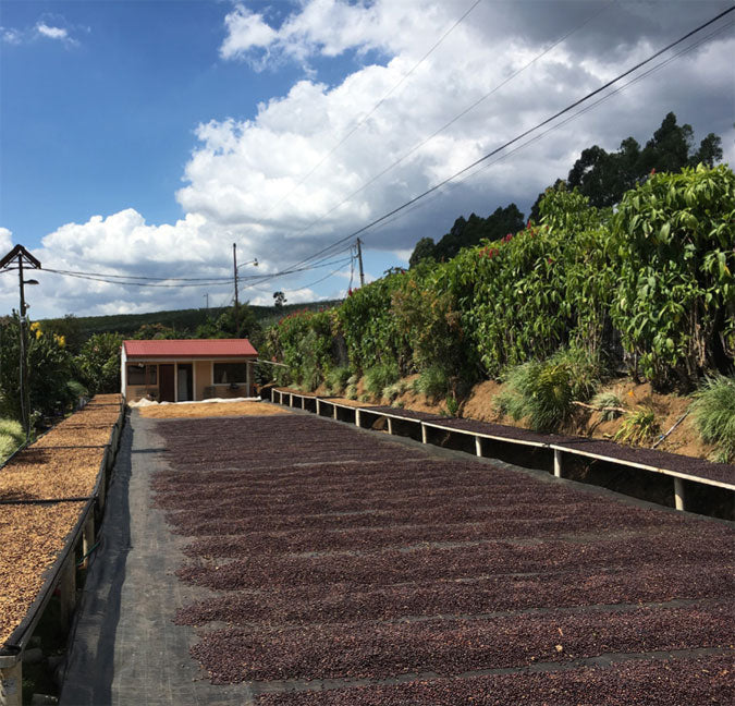 Costa Rica Single Farm half-washed, half-natural processed Black Honey specialty coffee