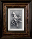 The Blue Jay — Framed 5 x 7