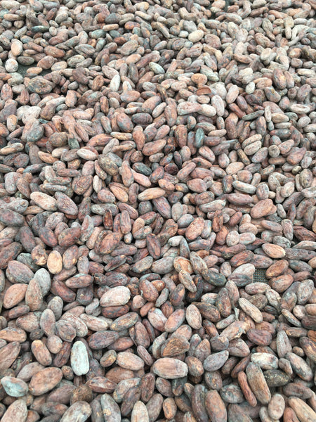 Single Farmer Organic Cacao Nibs (San Antonio, Belize)