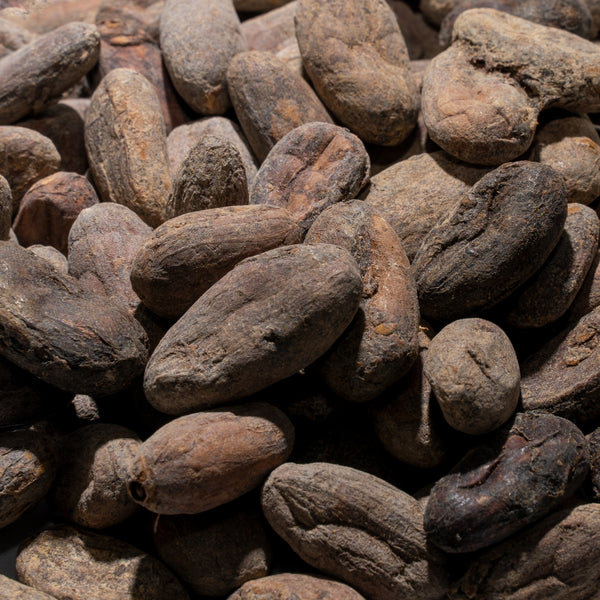 Cacao Beans, Trinitario (Fully Fermented), Luciano Sho, San Antonio Belize