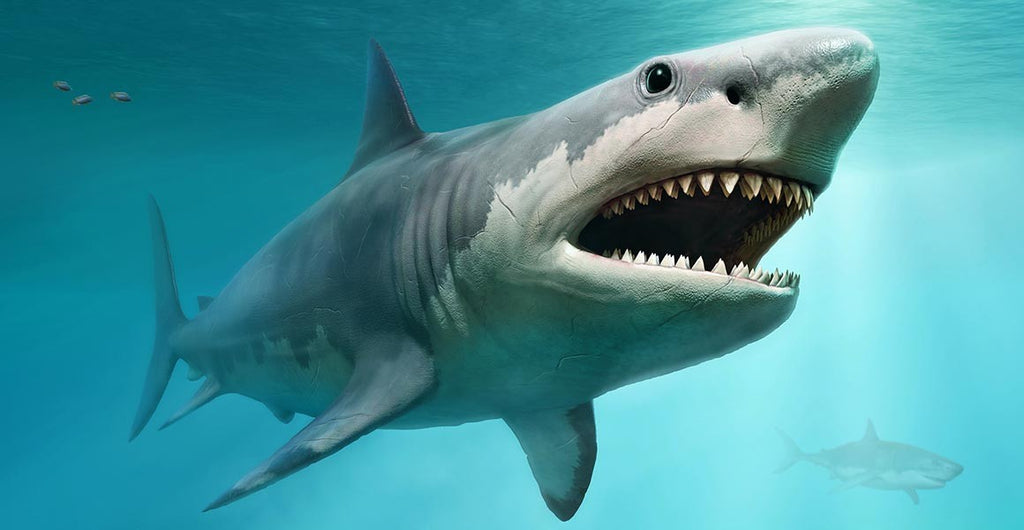 All About the Megalodon Shark