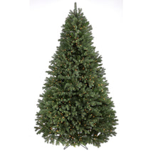 Colorado Spruce Christmas Trees