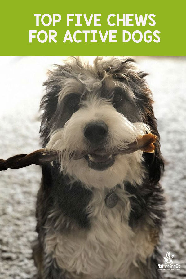 Top Five Chews for Active Dogs