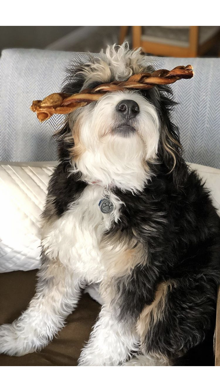 How Long Do Bully Sticks Last?