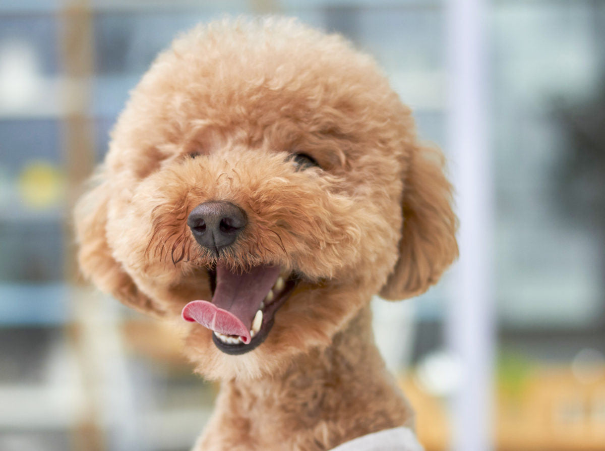 Dental Care for Dogs: Tips and Tricks